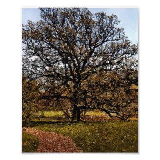Tree I Photo Of Arboretum Tree Digitized Painting