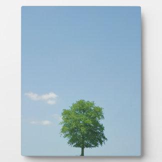 Tree in  a field 2 plaque