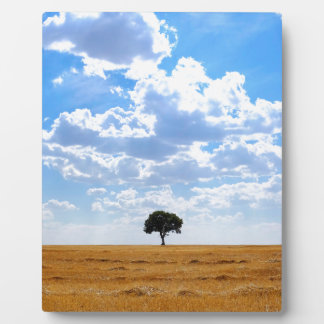 Tree in an harvested wheat field plaque