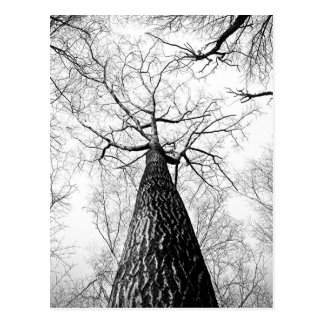 Tree in black and white postcard
