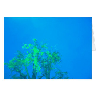 tree in blue greeting card