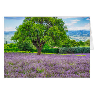Tree in Lavender Field, France Card