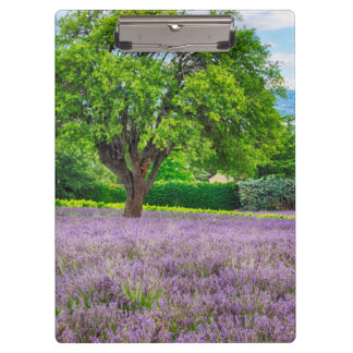 Tree in Lavender Field, France Clipboard