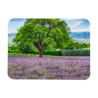 Tree in Lavender Field, France Rectangular Photo Magnet