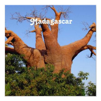 "Tree in Madagascar 5.25"" Square Invitation Card"
