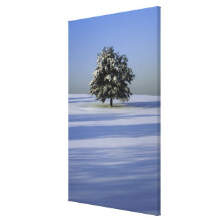 Tree in snow covered landscape stretched canvas print