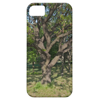 Tree in the springtime barely there iPhone 5 case