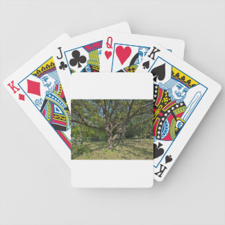 Tree in the springtime bicycle playing cards