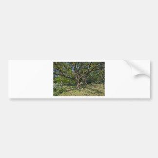 Tree in the springtime bumper sticker