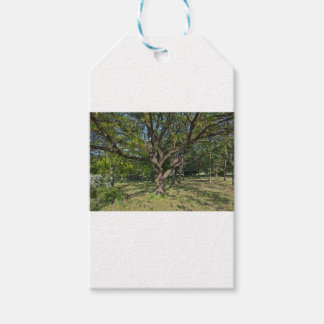 Tree in the springtime gift tags