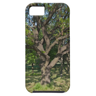 Tree in the springtime iPhone 5 cover