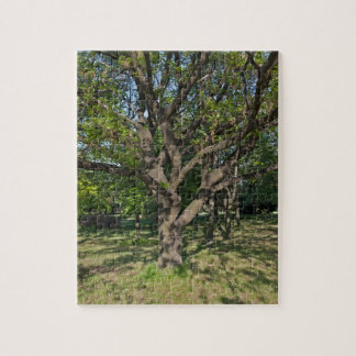 Tree in the springtime jigsaw puzzle