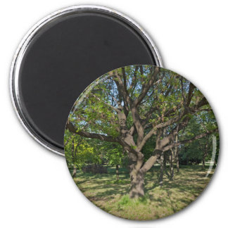 Tree in the springtime magnet