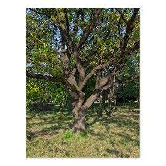 Tree in the springtime postcard
