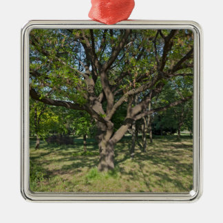 Tree in the springtime Silver-Colored square decoration
