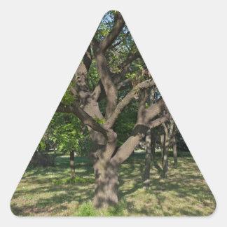 Tree in the springtime triangle sticker
