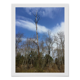 Tree in the Woods Poster