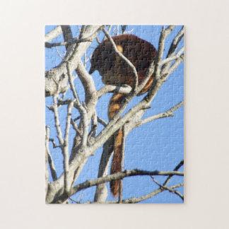 Tree Kangaroo Puzzle