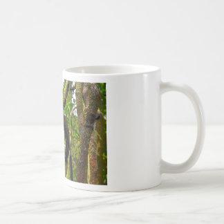TREE KNOT AT MOUNT TAMBORINE QUEENSLAND AUSTRALIA BASIC WHITE MUG