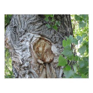 Tree Knot Hole Postcard