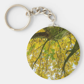 Tree leaves and branches from below in fall key ring