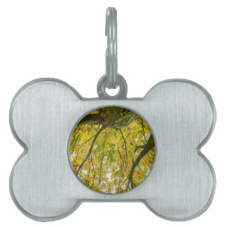 Tree leaves and branches from below in fall pet name tag