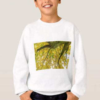 Tree leaves and branches from below in fall sweatshirt