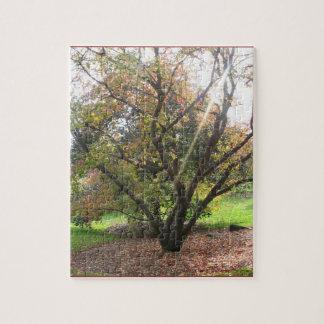 Tree Light Ray Autumn Puzzle