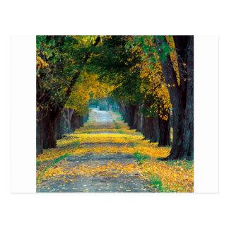 Tree Louisville Roadway Kentucky Postcard