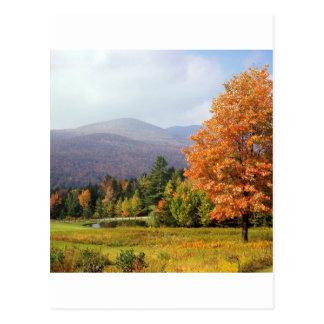 Tree Mount Mansfield Vermont Postcard