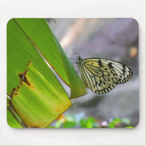 Tree Nymph Rice Paper Butterfly Mousepad