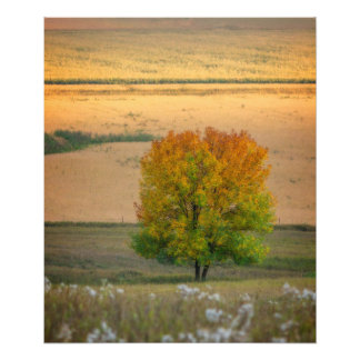 Tree of Fall Colors Photograph