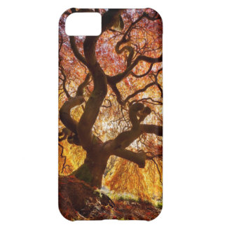 tree of life iPhone 5C case