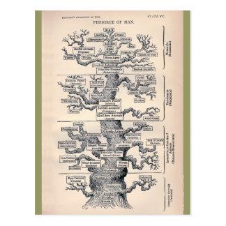 Tree Of Life / Pedigree Of Man Postcard