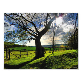 Tree of Life Photo Print