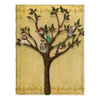 TREE OF OWLS Postcard
