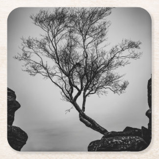 Tree on a Cliff Square Paper Coaster