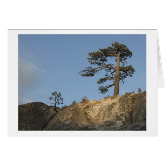 Tree on Ridge East of Kibbie Lake Outlet Card