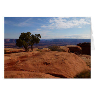 Tree Out of Red Rocks at Canyonlands National Park Greeting Card