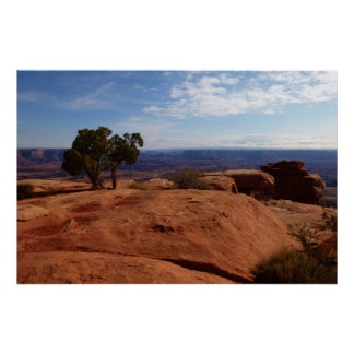 Tree Out of Red Rocks at Canyonlands National Park Poster