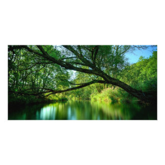 Tree Over Lake Photo Greeting Card
