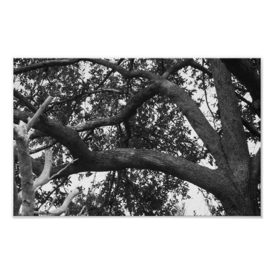 Tree Photo Black And White Poster