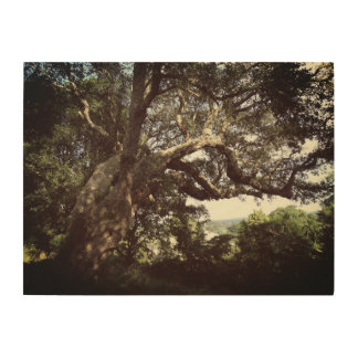 Tree Photo  Wood Wall Art