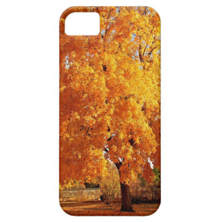 Tree Reality Autumn iPhone 5 Covers