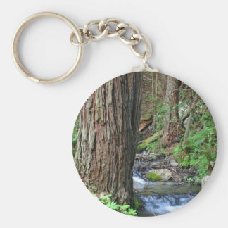 Tree Redwood Stream Key Ring