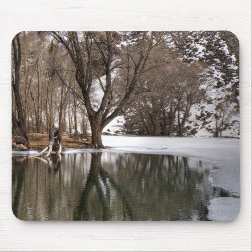 Tree Reflection Mousepad