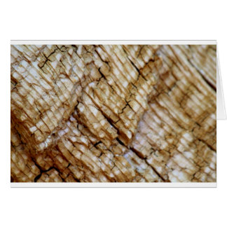 Tree Ring Layers Card