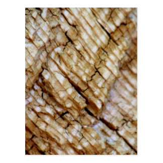 Tree Ring Layers Postcard