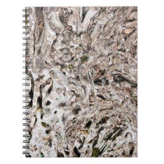 Tree root composition notebook