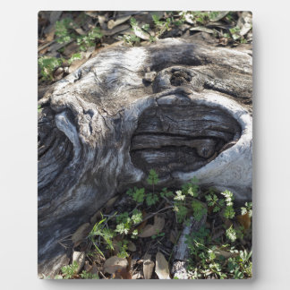 TREE ROOT PLAQUE